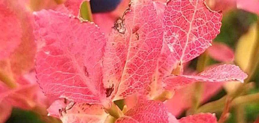 L'automne à Meribel